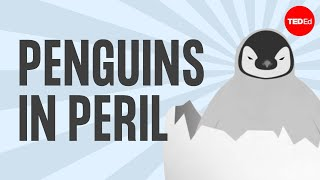 Penguins: Popularity, Peril And Poop - Dyan DeNapoli