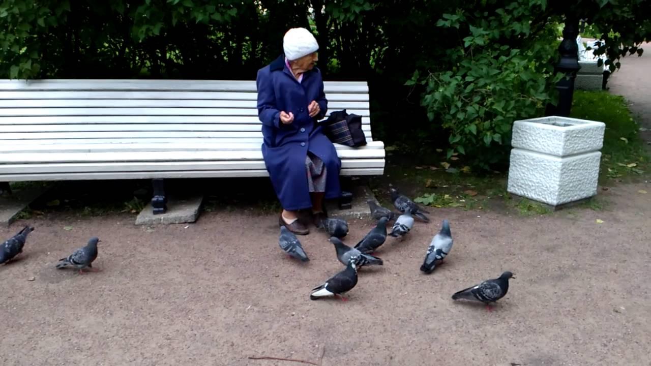 том, картинки старушка кормит голубей часть