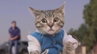 Приколы с котами МУЛЬТ С ЖИВЫМИ КОТАМИ 2017 ТОПЧИК УГАР