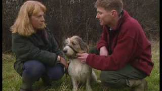 How to stop your dog pulling his lead - Barking Mad - BBC Pets