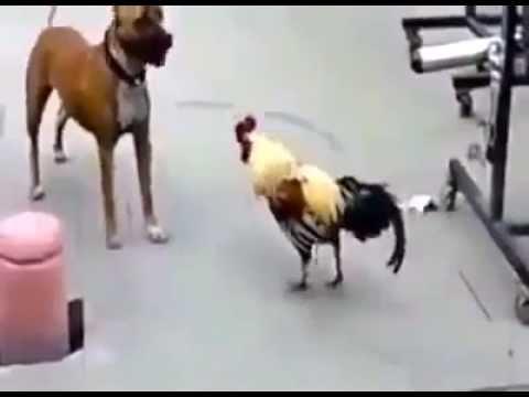 Самое смешное видео видео –