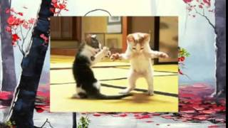 Котята танцуют