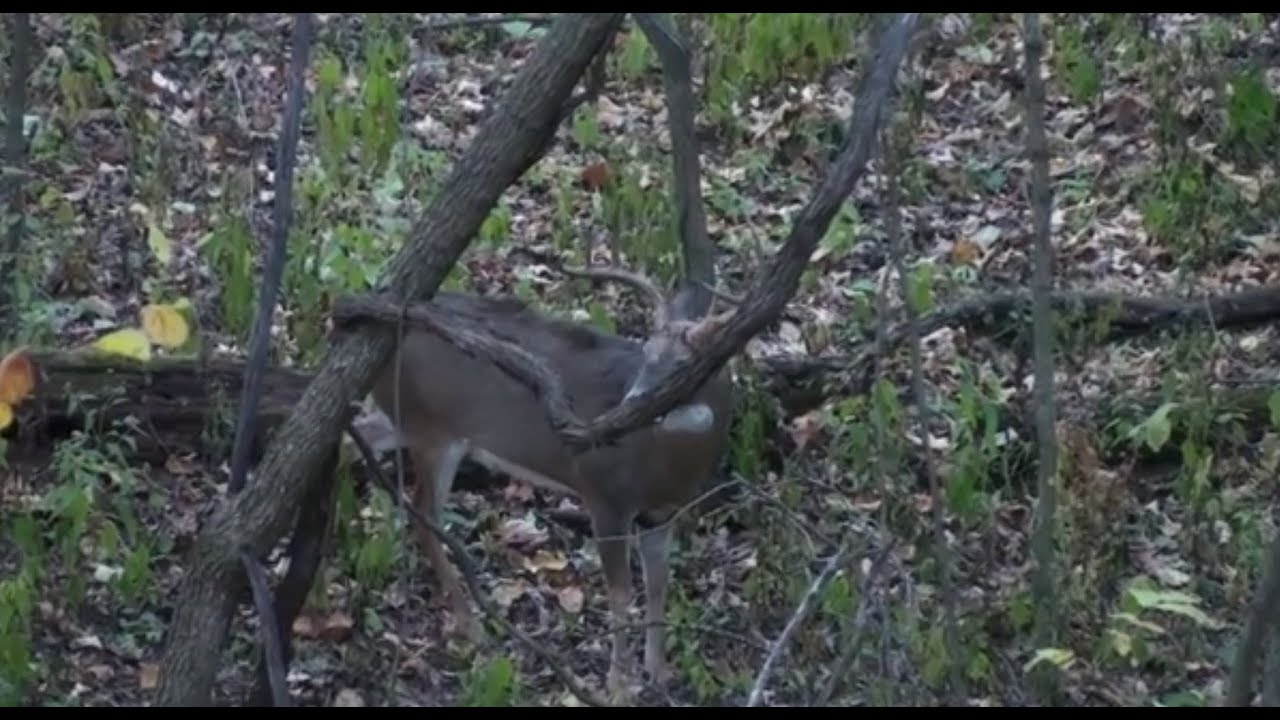 How To Find The Best Locations For Low Impact Deer Stands
