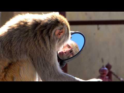 Крылов Зеркало и Обезьяна