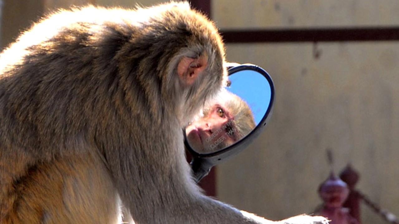 обезьянка и зеркало картинки последний