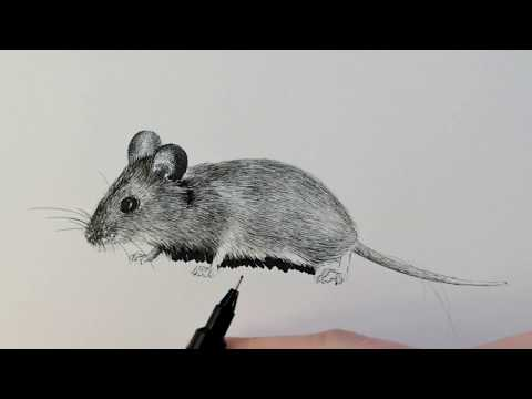 DRAW ANIMALS WITH INK, #1 tiny mouse / Test video Skillshare
