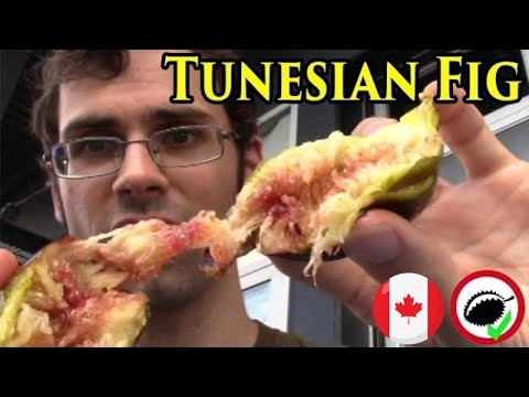 Tunisian Fig Review at a Historic Market in Montreal - Weird Fruit Explorer in Montreal - Ep. 330