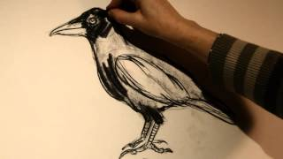 Crow Drawing Tutorial with Kat Thorsen