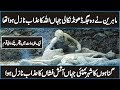 Pompeii Documentary in Urdu Hindi | Discover The World