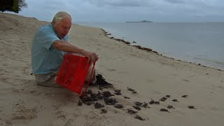 Malaysian Green Turtles | Attenborough 60 Years in the Wild | BBC Earth