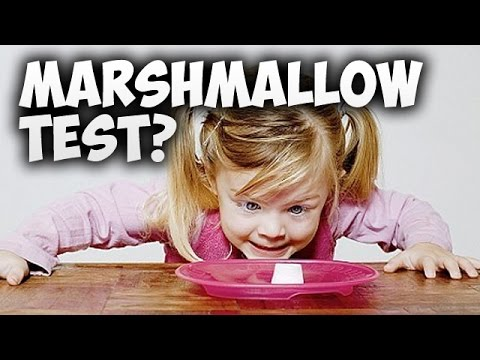 the marshmellow test review