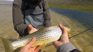Pêche de la tuite fario/Brown trout au leurre en Islande | n°4