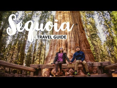 Sequoia National Park Travel Guide   Things to do & see on a weekend