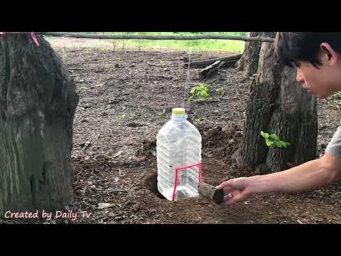 Как создать легкую ловушку для птиц, используя большую пластиковую бутылку?