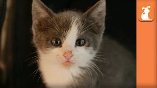 Curious Baby Kitten Plays With Camera Strap - Kitten Love
