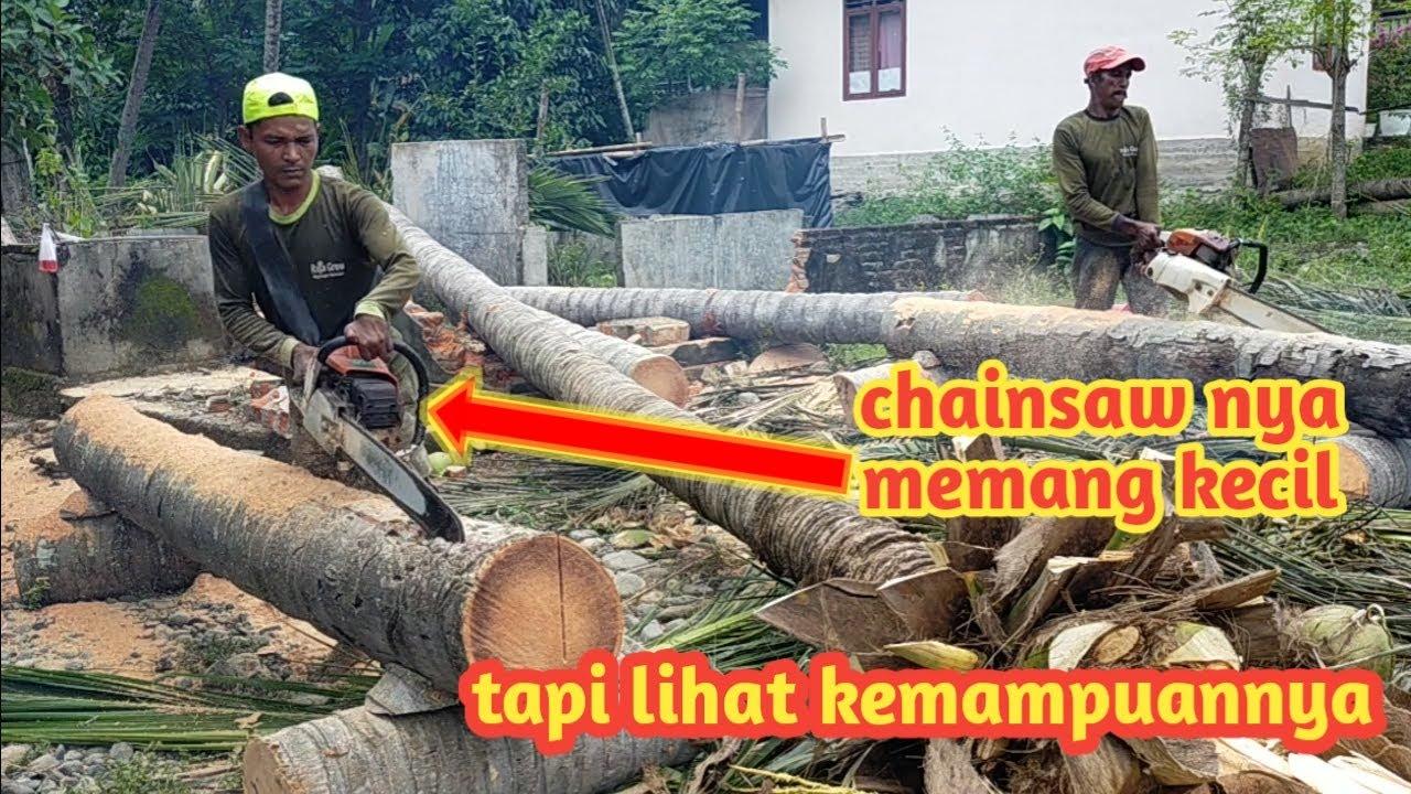 proses membelah batang kelapa untuk material bangunan