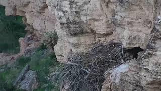 eagle nest zoom