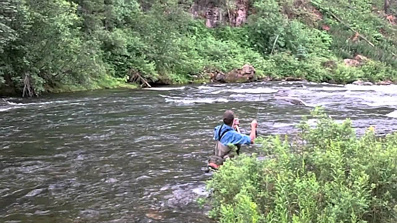 Fly fishing the pine river los pi os colorado youtube for Colorado out of state fishing license