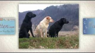 Pet Urns For Your Hunting Dog