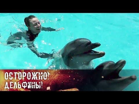 Чем болеют дельфины