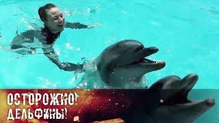 Осторожно! Дельфины!