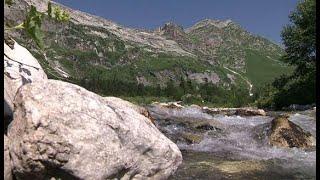 Отдых в горах: Кавказский заповедник снял все ограничения на летних маршрутах