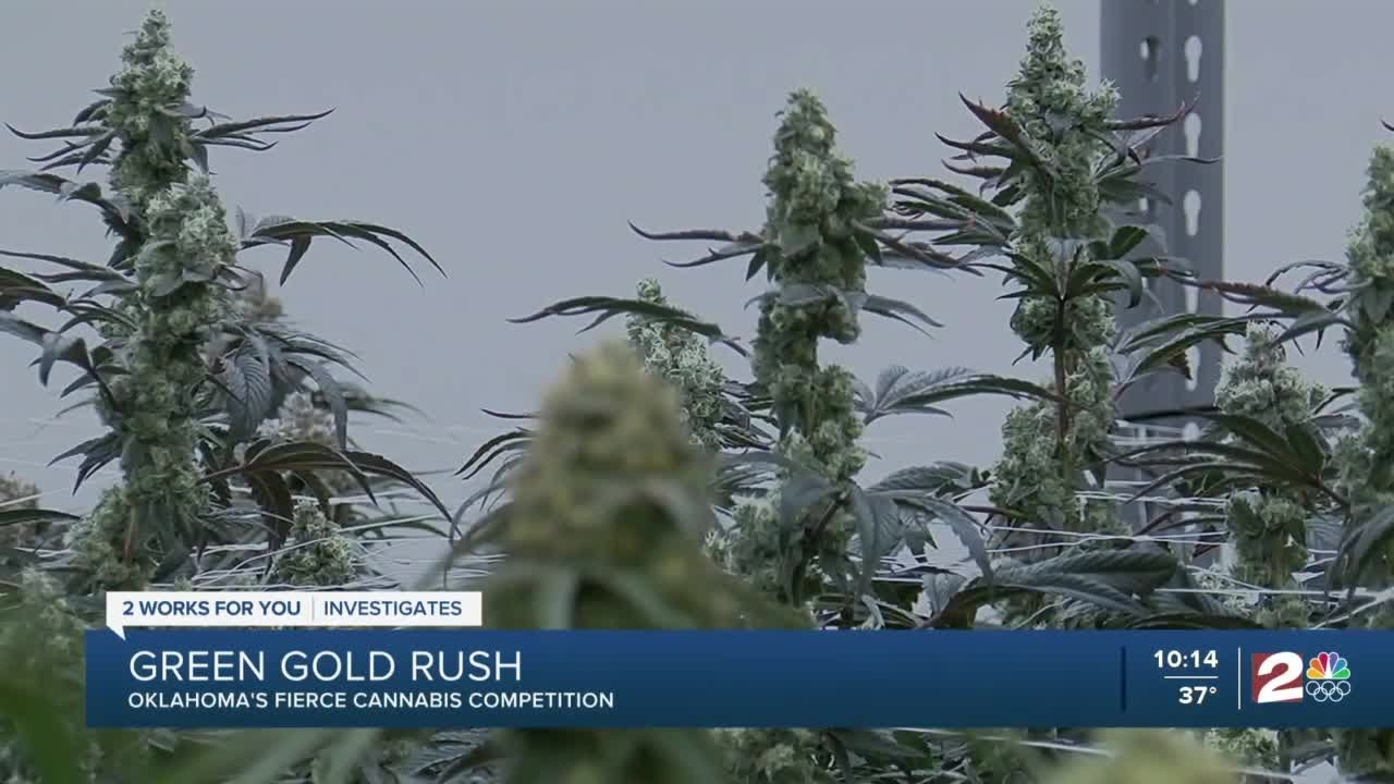 Download Green Gold Rush: Oklahoma's fierce cannabis competition