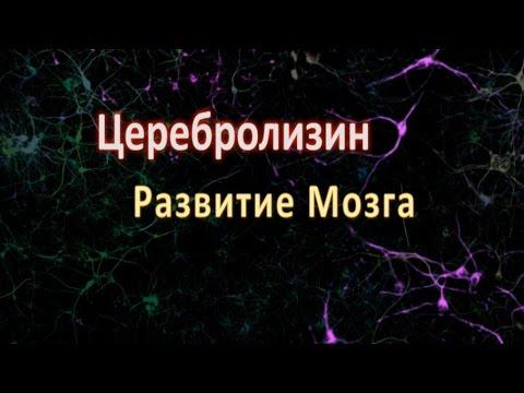 Церебролизин, Развитие мозга!