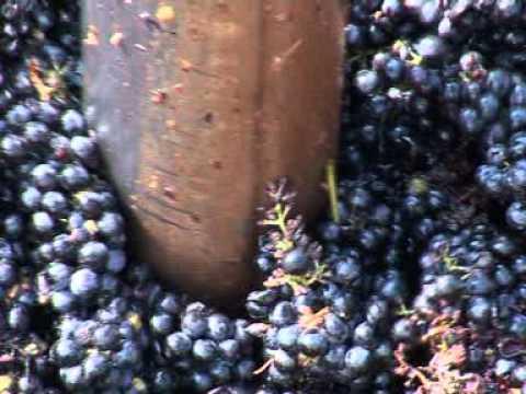 Italian Wine Cellar: Cantina Alta Padovana - www.cantinaaltapadovana.it