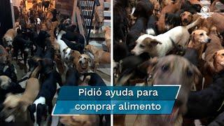 Hombre resguarda a 300 perros en su casa por huracán