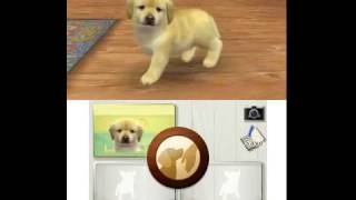 Nintendo 3DS Citra Emulator Nintendogs + Cats - Golden Retriever & New Friends Game Play