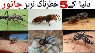 5 Most dangerous animals in the world