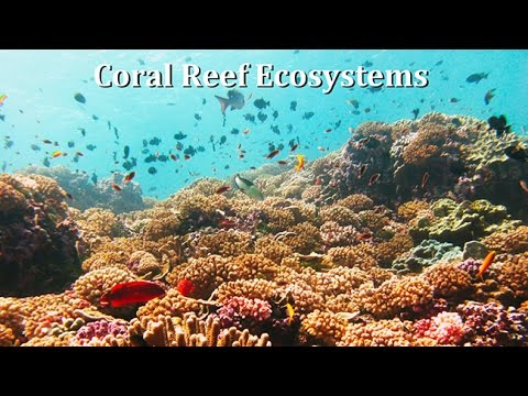 Coral Reef Ecosystems:  Human Impacts Pristine Reefs and Con