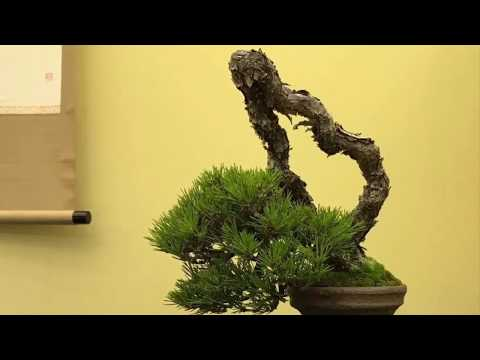 44th Gafuten Shohin Bonsai Show 2019 Part 1