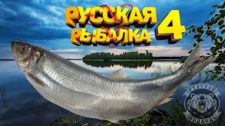 Стрим Турнир Русская Водка и Черноморская Селедка Русская Рыбалка 4 топ игра Русский Медведь