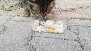 Sevimli Pilavcı Misafirimiz Kedi