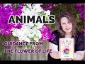 Flower of Life Cards - Animals