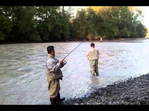 Fishing at puyallup river wa 2013 youtube for Puyallup river fishing