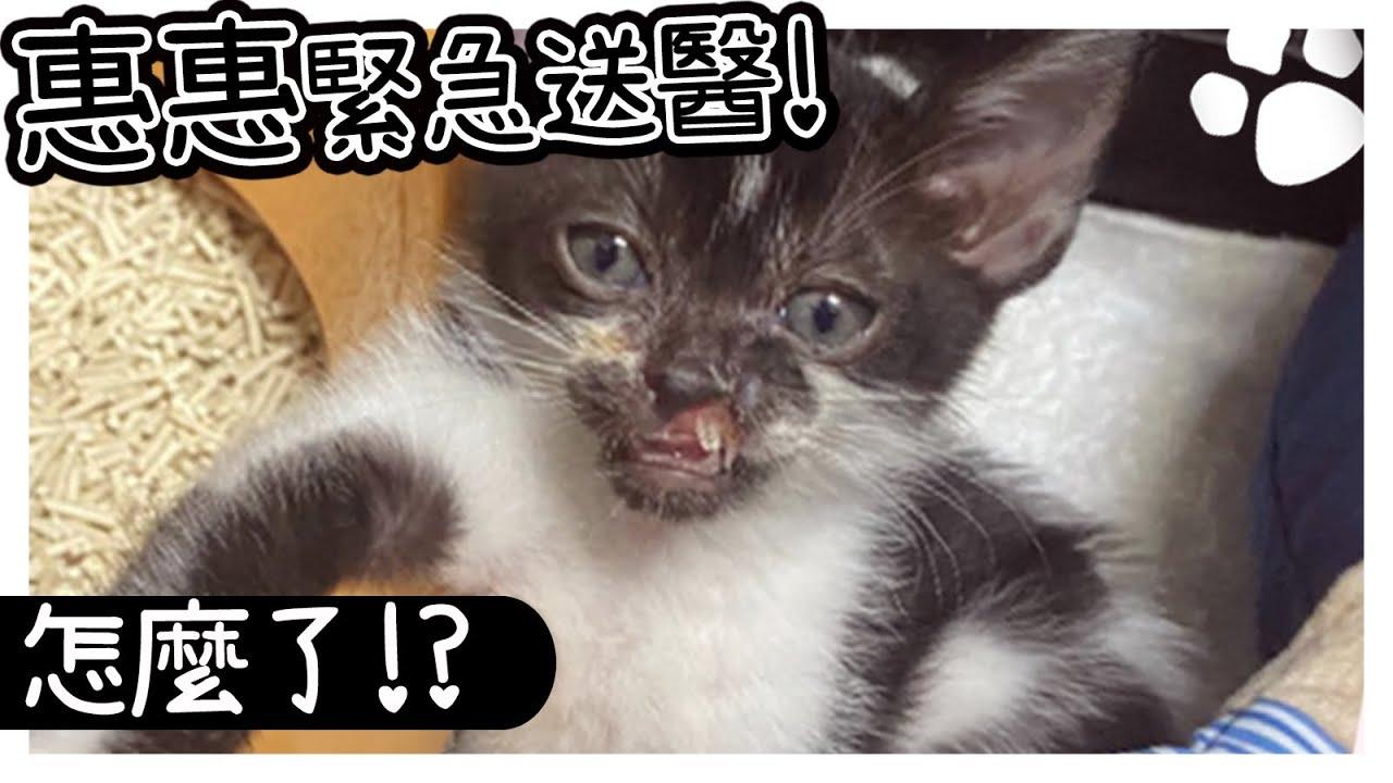 緊急送醫?惠惠的鼻子掉下來了?! 喵咪日記【羽喵瞳樂惠】
