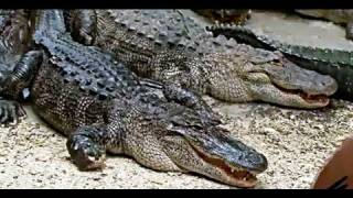 Gatorland, the Alligator Capital of the World - Orlando Florida