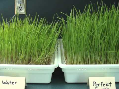 Eliminating mold in wheatgrass youtube - What to do about mold ...