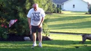 Dog Retrieving Golf Balls