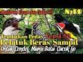 Masteran Kasar Dan Pedas Tembakan Pelatuk Beras Versi  Untuk Murai Batu Cendet Cucak Ijo Dll  Mp3 - Mp4 Download
