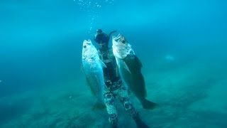 Spearfishing Coffs Harbour