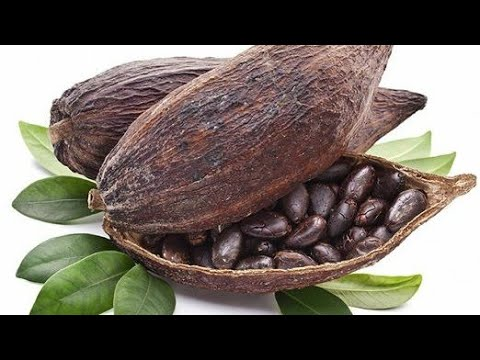 Top 10 Cocoa Producing Countries