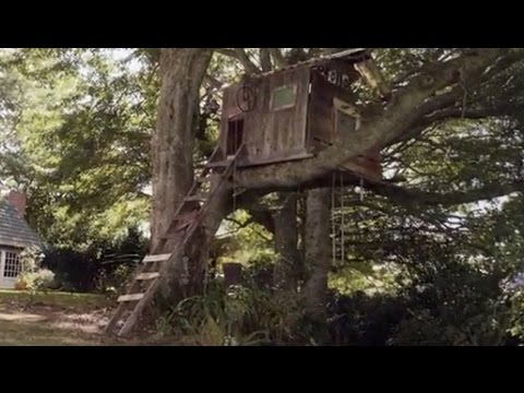 PEDIGREE® - Treehouse