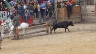 Un taureau saute dans les gradins et s