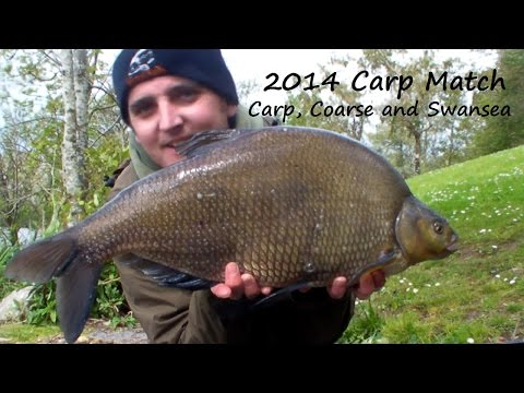 *** Fishing *** The 2014 Carp Singles Match On The Fendrod Lake In Swansea. Video 112