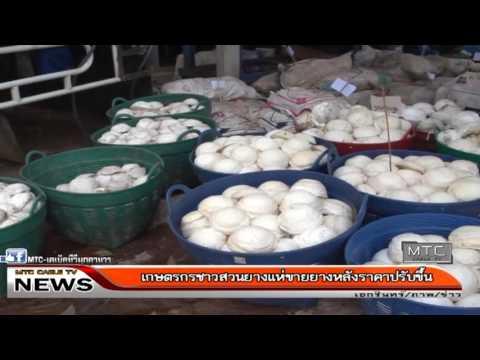 เกษตรกรชาวสวนยางแห่ขายยางหลังราคาปรับขึ้น