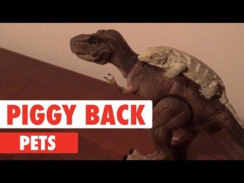 Piggy Back Pets